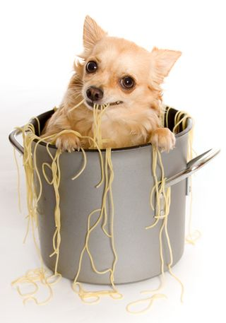 Puppy in pot
