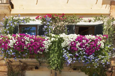 Flowers balcony May blog