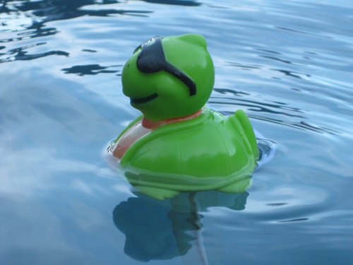 Swimmingduck