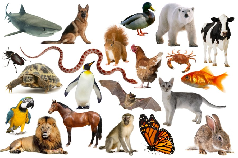 Becoming Italian Word By Word Animals In The Italian Language